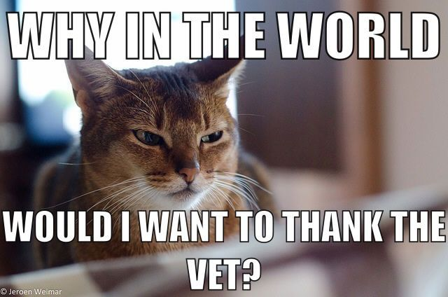 skeptical cat on veteran's day...