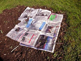 Newspaper weeds away: Plant your plants in the ground, work the nutrients in your soil. Then wet newspapers, put layers around the plants overlapping as you go, cover with mulch, and forget about weeds. Weeds will get through some gardening plastic they will not get through wet newspapers.  (and other interesting tips!)