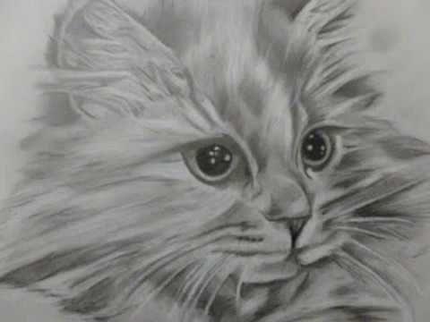 disegni a matita passo a passo - gatto