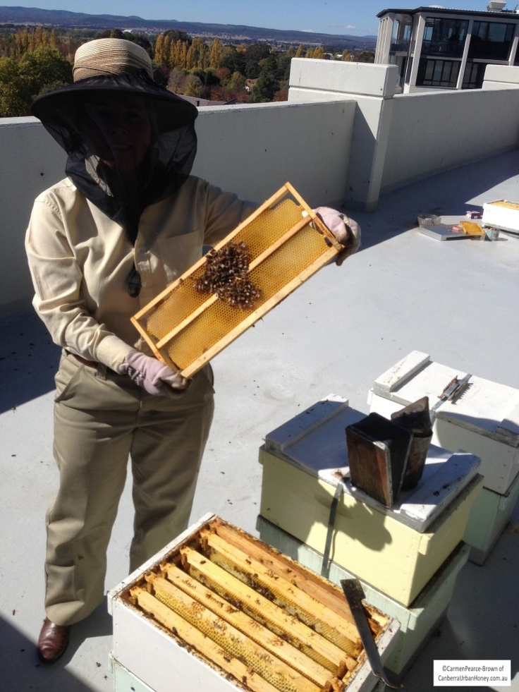 how to get rid of bees in canberra