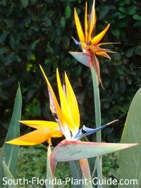 South Florida Plant Guide