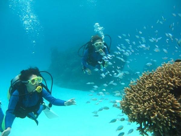 沖縄・渡嘉敷島 - begin ダイビングバディズさん|あそびゅー!スキューバダイビング