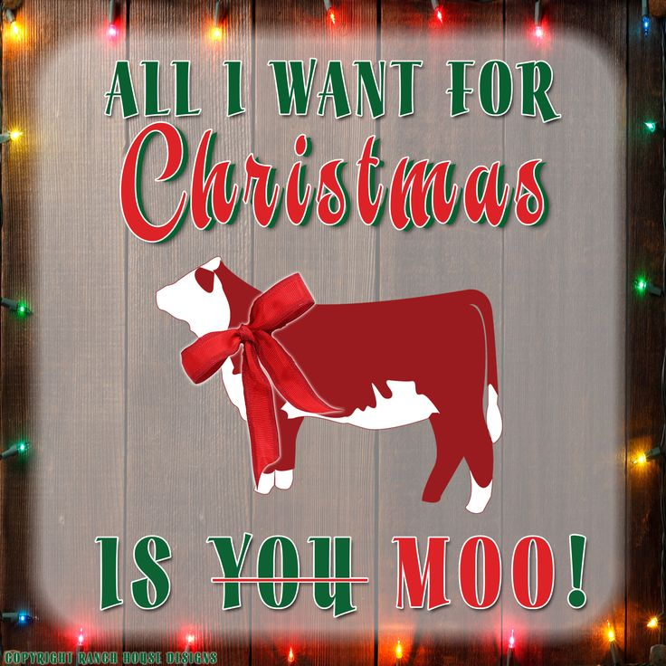 If only show cattle fit under the christmas tree...
