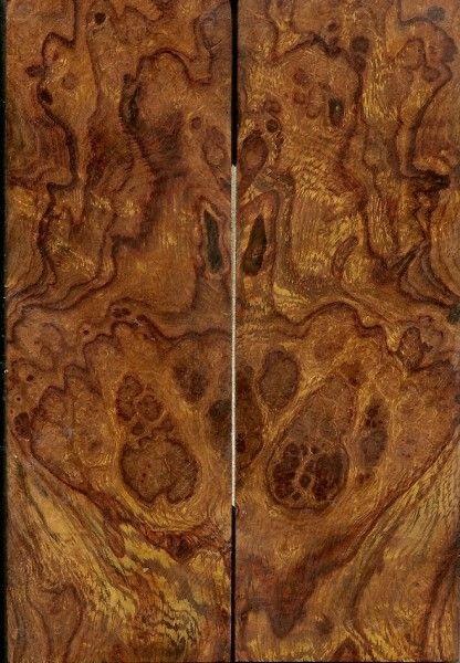 Best images about wood identification on pinterest