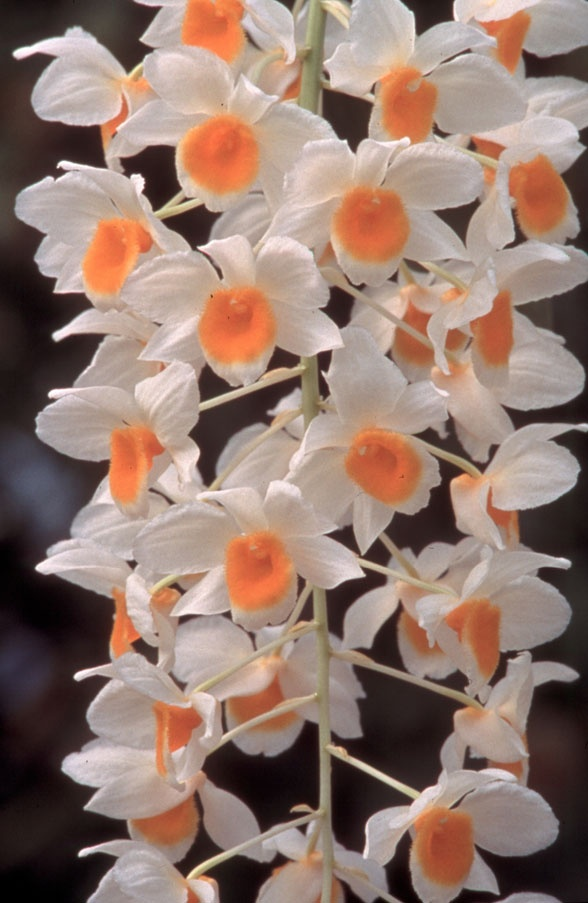 How Not to Kill Your Orchid