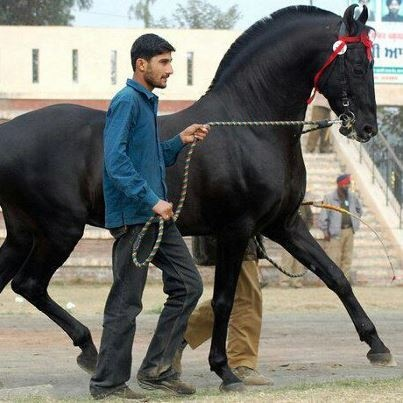 It's it sad that all I see is a pushy disrespectful horse that needs to be taught to walk BEHIND the person leading him