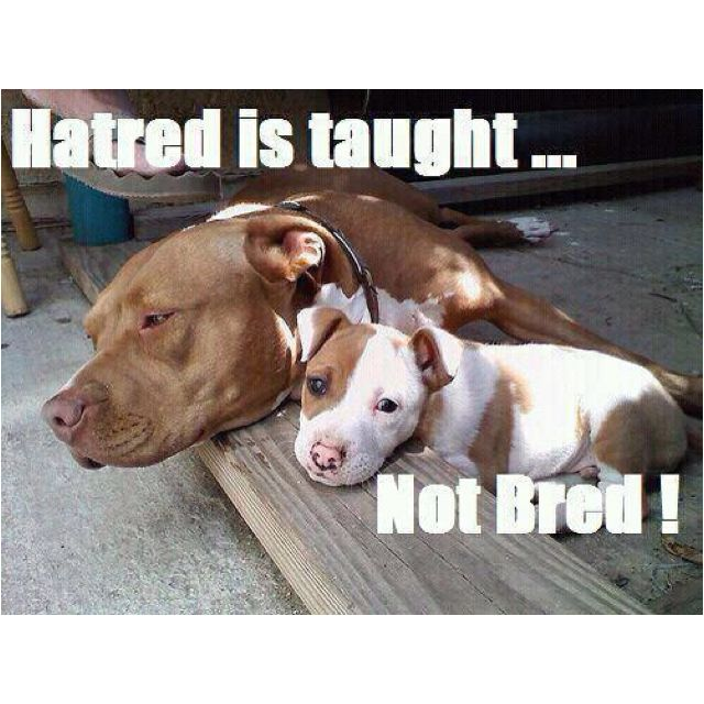 Image result for pitbulls are not monsters