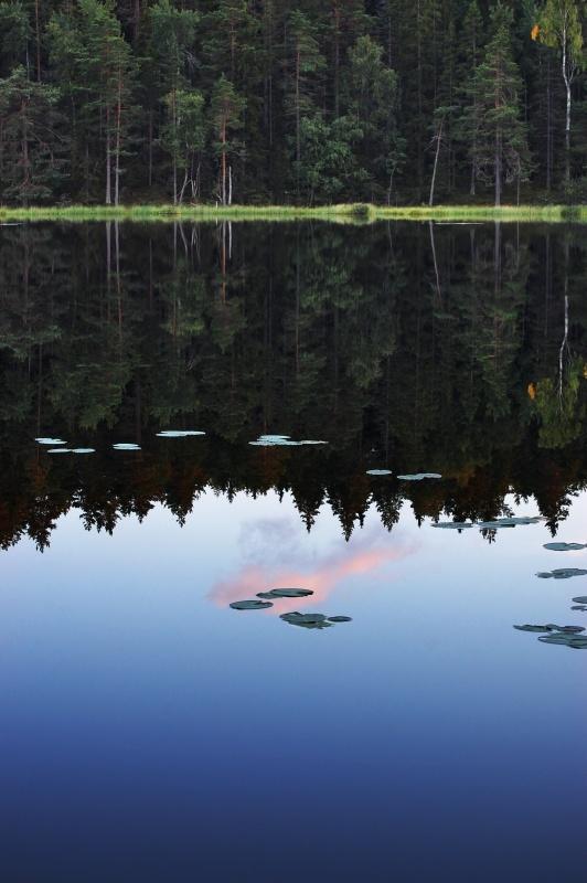Tyresta After Rain — at Tyresta National Park, Stockholm, Sweden