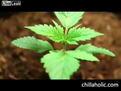 17 best images about grow your own on pinterest plugs for Indoor gardening for dummies