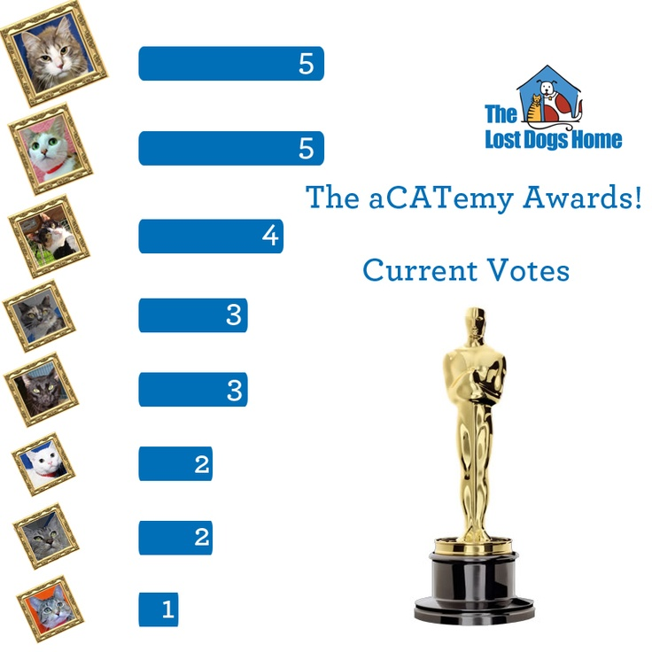 Here is how the votes are currently stacking up for the aCATemy Awards!!    If you haven't gotten your vote in yet go to: http://do.gs/xqDyKl and leave a comment!    Don't forget that you go into the running to win a Cat Lovers Dream Basket just for voting!!    Is your favourite out in front?    Remember Entries only count on the original picture at:http://do.gs/xqDyKl