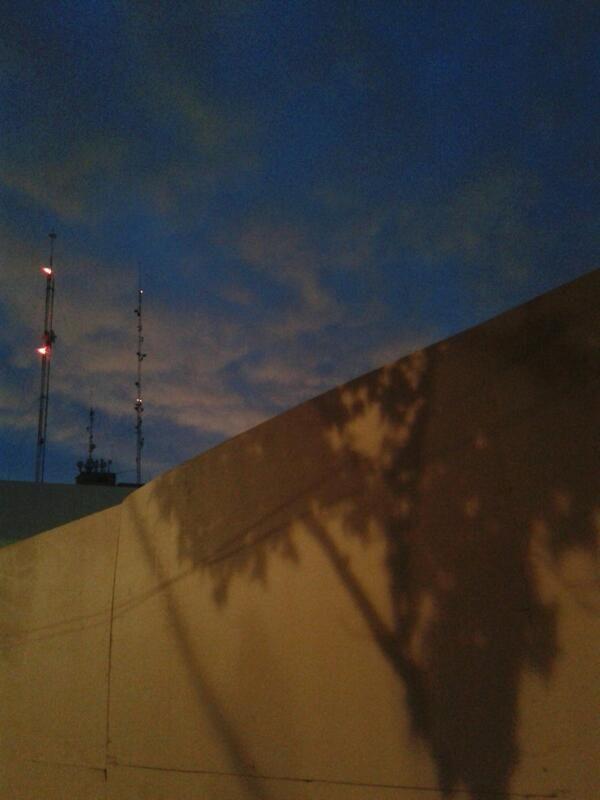 El árbol que de grande quería ser nube. Reporta Gaytanariza.