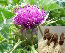 The Best Herbs For Liver Cleansing, Including Liver Tonic Recipe.