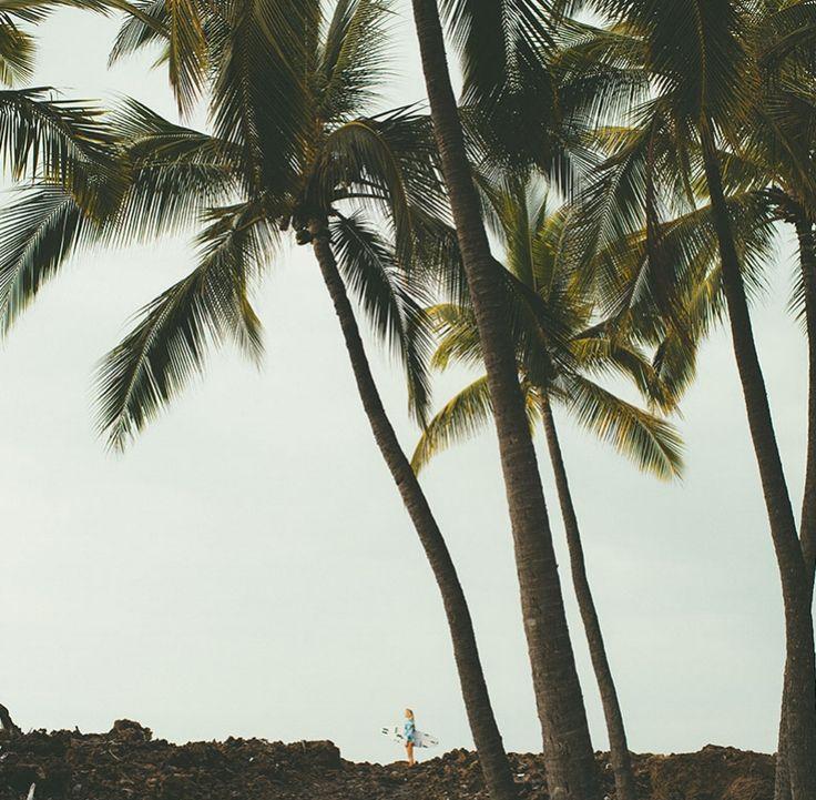 A palmy daydream.