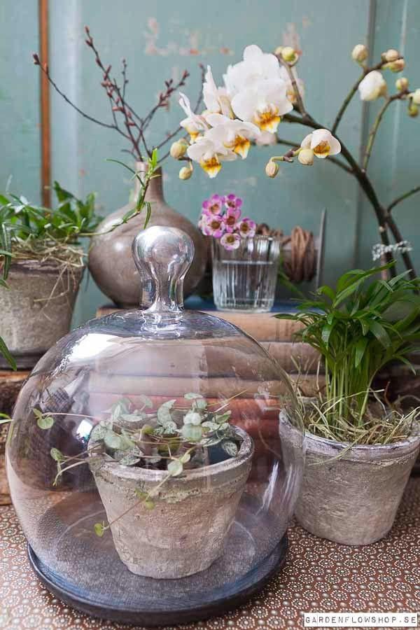 die besten 25 orchideen im glas ideen auf pinterest terrarium diy terrarium und mini terrarium. Black Bedroom Furniture Sets. Home Design Ideas