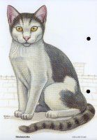 Házi állatok_51-Házi macska.jpg