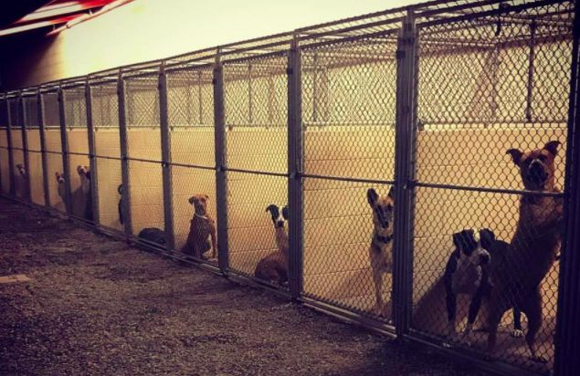 Maricopa County Animal Care and Control'seast Valley shelter is battling a highly contagious and potentially deadly upper respiratory infection. More than 30 dogs are currently displaying symptoms. Officials say at least one dog passed away after testing positive for thebacterium, Streptococcus …