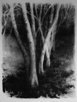 Elaine Green - 'Oregon Forest Black Leaves' - The Art Spirit Gallery of Fine Art charcoal