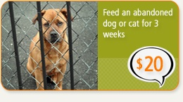 Donate to ASPCA.  Running low on funds?  Go on their website and sign their pledge