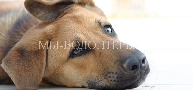 """Поведение собаки при возникающих болях  http://xn----dtbjxcjfbus6gj.xn--p1ai/health/%d0%bf%d0%be%d0%b2%d0%b5%d0%b4%d0%b5%d0%bd%d0%b8%d0%b5-%d1%81%d0%be%d0%b1%d0%b0%d0%ba%d0%b8-%d0%bf%d1%80%d0%b8-%d0%b2%d0%be%d0%b7%d0%bd%d0%b8%d0%ba%d0%b0%d1%8e%d1%89%d0%b8%d1%85-%d0%b1%d0%be%d0%bb/ Было бы просто замечательно, если бы собака могла ответить на вопросы ветеринара: """"Где бо"""
