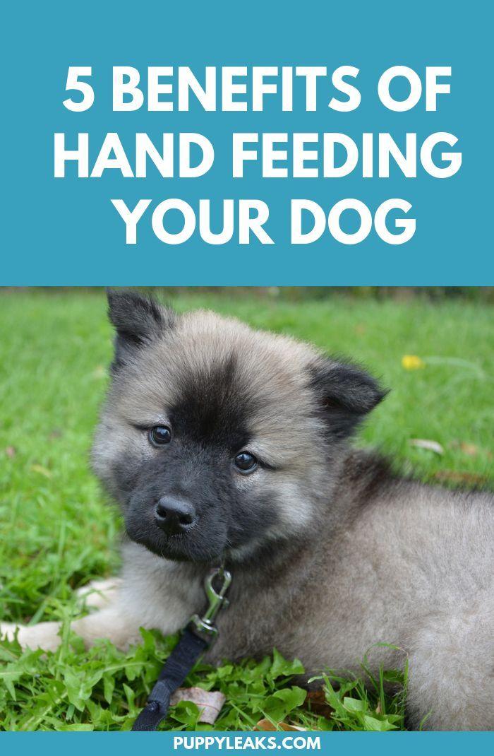 5 Benefits Of Hand Feeding Your Dog Dog Training Dog Clicker