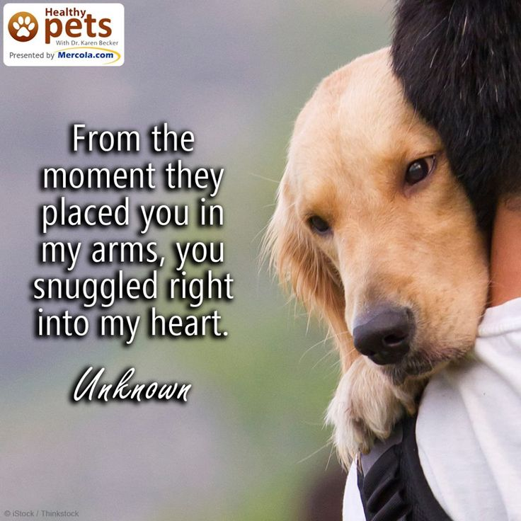 Best 25+ Old Dog Quotes Ideas On Pinterest