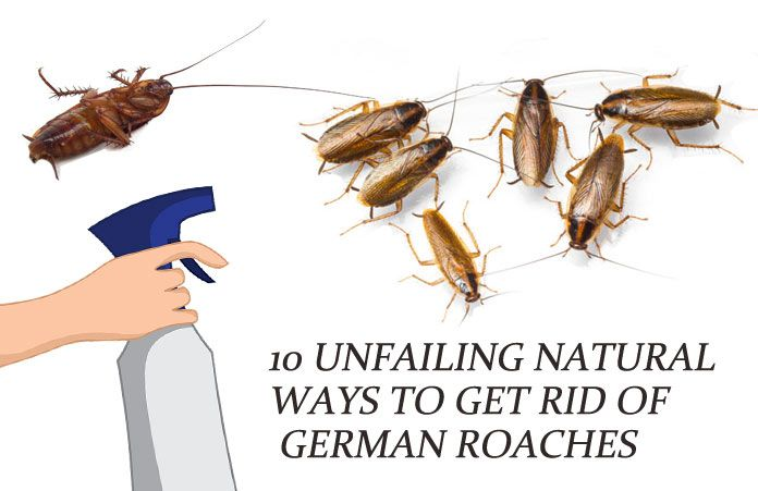 10 Unfailing Natural Ways To Get Rid Of German Roaches Baby Cockroaches Fast Cockroaches Roaches Baby Cockroach