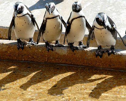 Baltimore Zoo