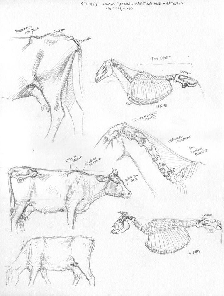 95 best anatomia images on Pinterest | Animal anatomy, Horse anatomy ...