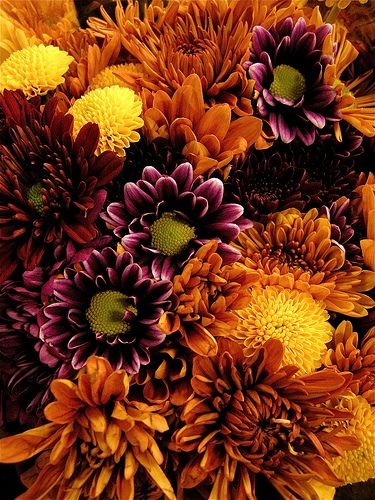 Mums..... flowers of the autumn/fall  when these bloomed at my grandma's, I knew it was almost Thanksgiving!!
