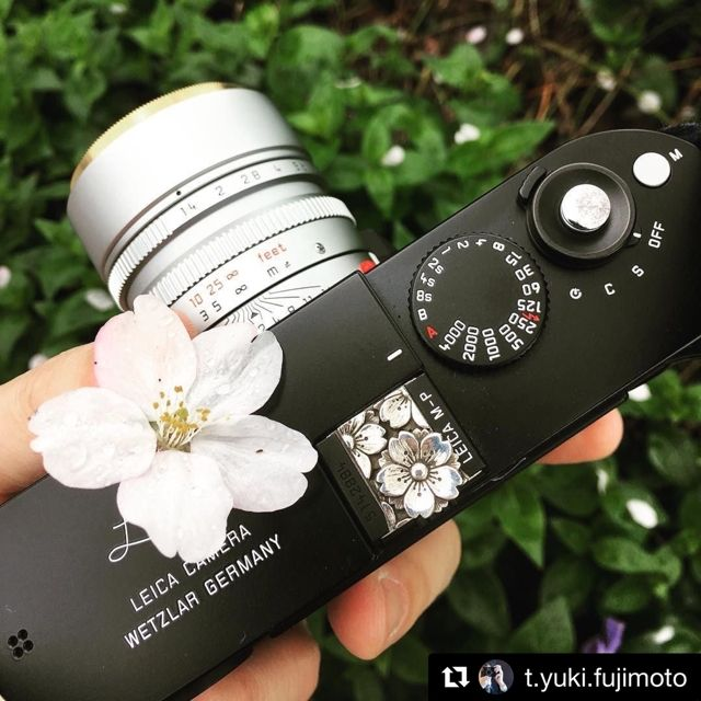 What a pretty Sakura Leica M-P (((o(*゚▽゚*)o))) post from Japan!!I love this Sakura & Sakura shot so much.Thank you so mu
