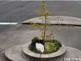 Portland, OR - World's Smallest Park, Mill Ends Park, 452 sq. inches officially became a city park in 1948.