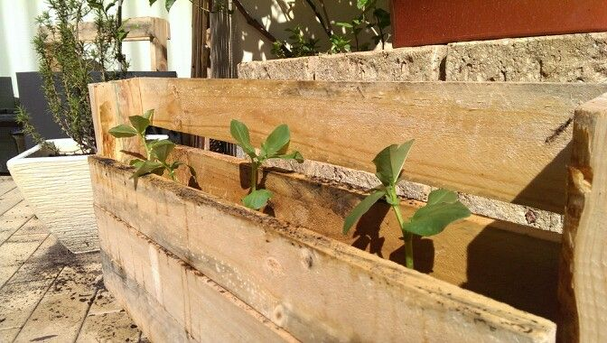 #projects #diy #pallet #upcycled #broadbeans