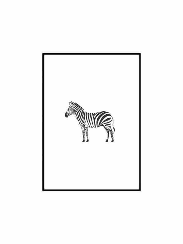 Poster – Zebra - Storlek 30x40