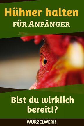 Hühnchen fängt für Anfänger an: Hühnerwechsel im Alltag