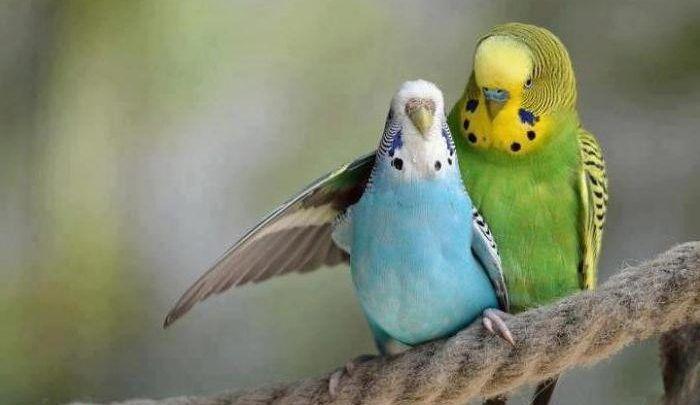 صور العصافير اجمل خلفيات عصافير الكناريا Macaw Animals Wild Birds