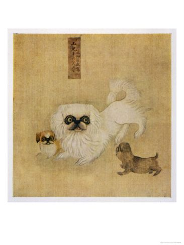 White Pekingese Dog and Puppies as Depicted in an Imperial Dog Book.  For centuries, ownership of the Pekingese was restricted to members of the Chinese imperial court. Venerated as good luck charms, the elegant little lion dogs lived a pampered existence and were not seen outside their country of origin until after 1860.