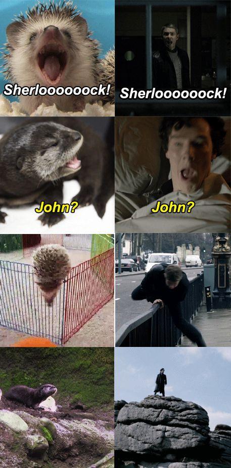 """""""I regret nothing.""""  Never regret Otterlock and Hedgehog Jawn.  Never.  (I am Otterlocked) -- Sherlockian shenanigans"""