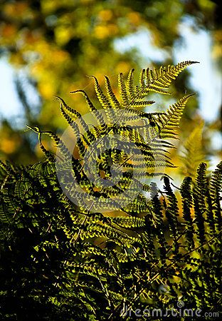 Fragment of autumnal fern leaves, close-up.