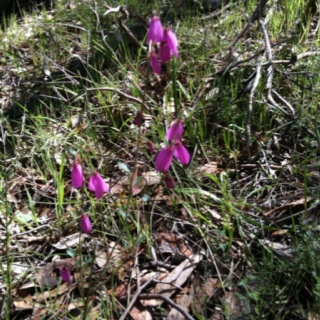 One of the indigenous wildflowers found on the property.