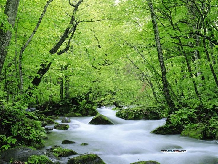Serenity Flows Through The Natural World Listen And You Can Hear Beating Of Your Own Heart Deepening Breath In Rhythm Conn