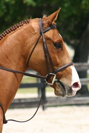 174 best horse business images on Pinterest Horse, Horses and