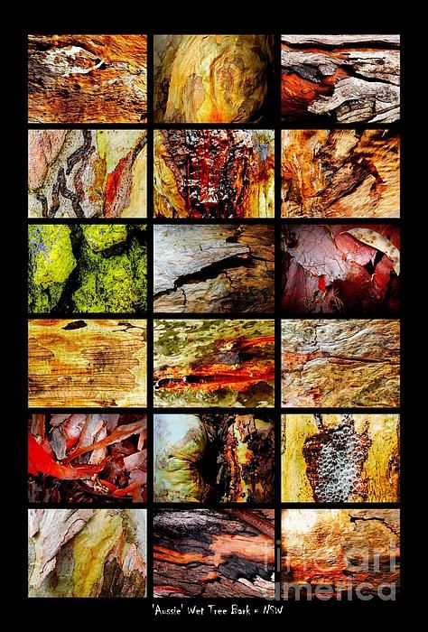 Tree Bark in the Wet Montage. Australian Tree Bark Series by Lexa Harpell. A collection of Aussie tree bark images. Taken from my travels around Australia. Add a splash of COLOUR and UNIQUE LOOK! Visit my photo gallery and get a beautiful Fine Art Print, Canvas Print, Metal or Acrylic Print OR Home Decor products. 30 days money back guarantee on every purchase so don't hesitate to add some AUSTRALIAN INTIMACY in your home.