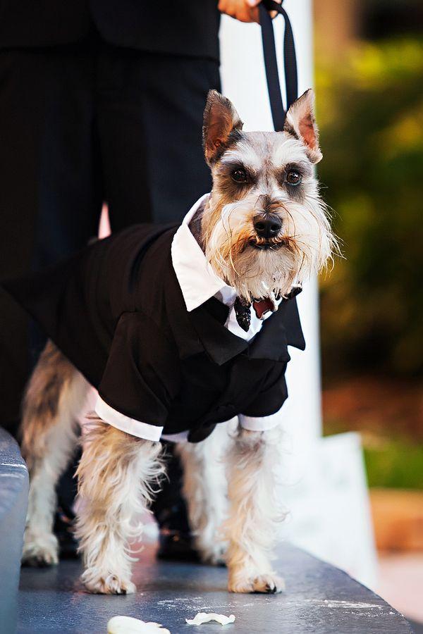 Adorable doggy tuxedo!