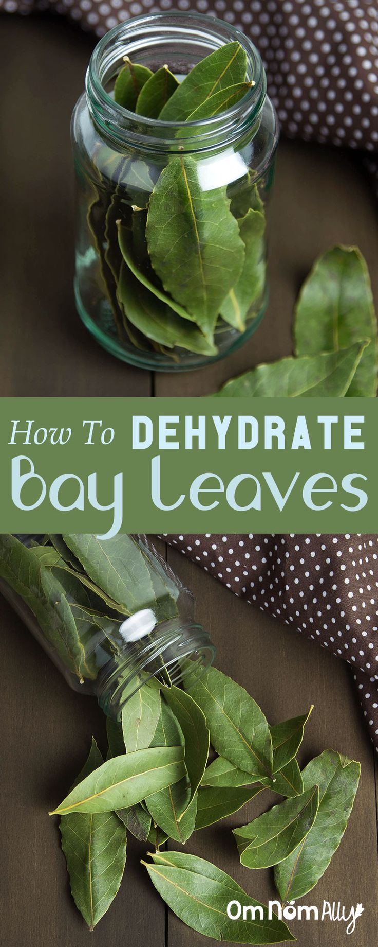 How To Dehydrate Bay Leaves @OmNomAlly    While fresh off the tree is best, dehydrating your bay leaves is a great long-term storage idea for the best soups, stocks and stews of your life!   Know someone with a bay tree? Beg them for some of the fresh stuff - it's phenomenal!  Have a tree and know some foodie friends? Dehydrating them some leaves is a fantastic present that every home cook will adore you for ;)