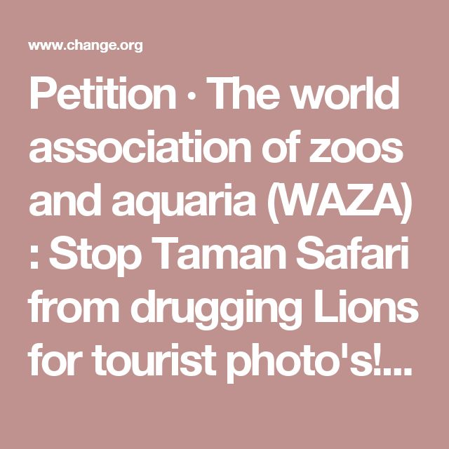 Petition · The world association of zoos and aquaria (WAZA) : Stop Taman Safari from drugging Lions for tourist photo's! · Change.org