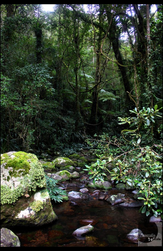 Lamington National Park, Queensland, Australia