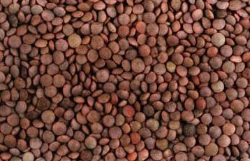 #Lentejas Composición por 100 gramos de porción comestible    Energía (Kcal)304  Proteínas (g) 24,2  Glúcidos totales (g)    48,7  Azúcares (g) 1,3  Lípidos totales (g)   1,4  Saturadas (g)    0,21  Fibra (g)    13  Sodio (mg)    125  Colesterol total (mg)    0  Vitaminas: vitamina A, B9, carotenoides  Minerales: Potasio, fósforo, magnesio, zinc Información obtenida de: Tablas de composición de alimentos del CESNID