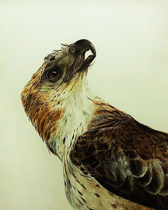 Hawk painting watercolor - photo#48