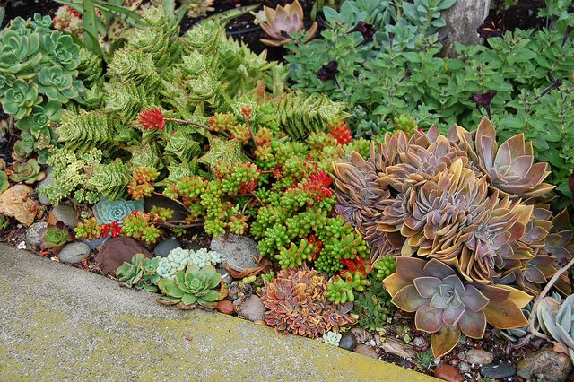Succulents Rock Garden Rock Gardens Amp Ground Covers