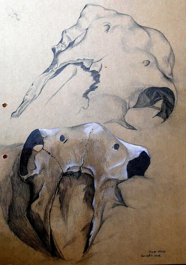 Graphite and white paint on mid-tone brown. Drawing of skulls buried in sand. Bones can be a great thing to draw within your GCSE Art sketchbook / Coursework.